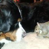 Squirrel nuts in dog