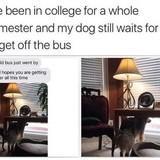 Such a good doggo