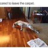 Scared doggo big comp