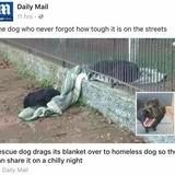 Empathy across species