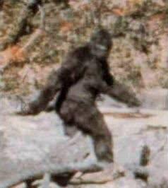 Bigfoot. .
