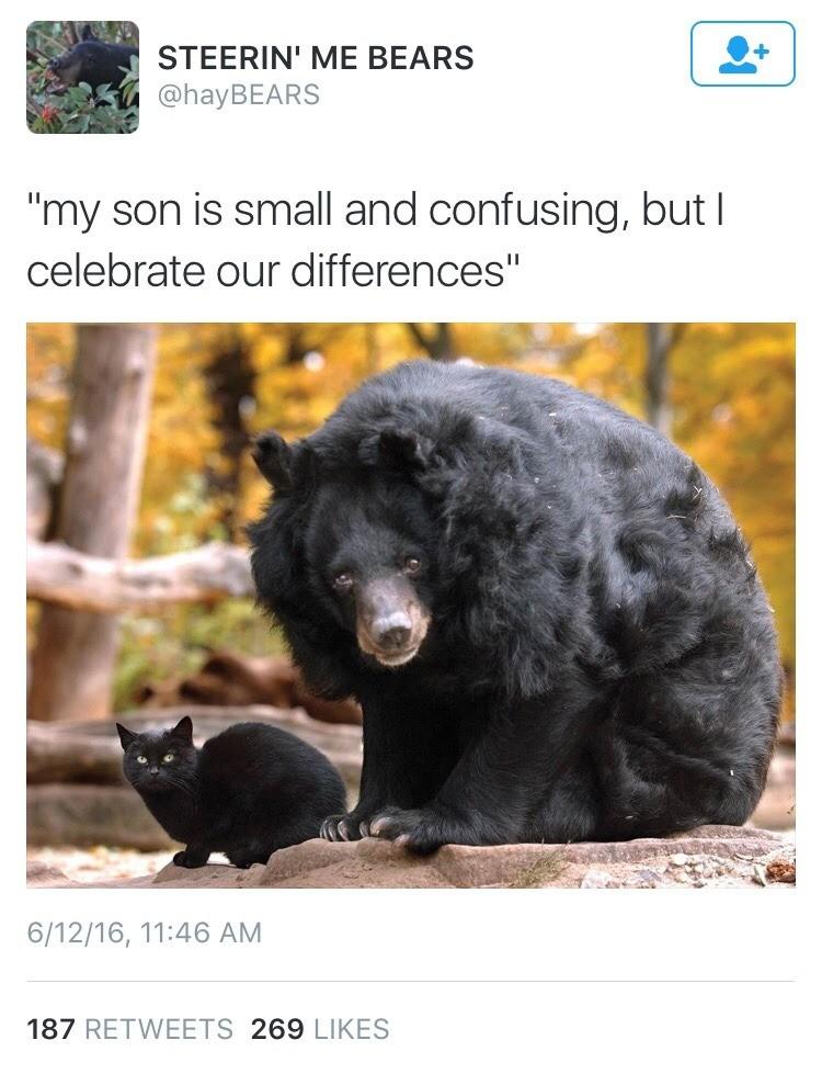 Bear cub. . Bear cub