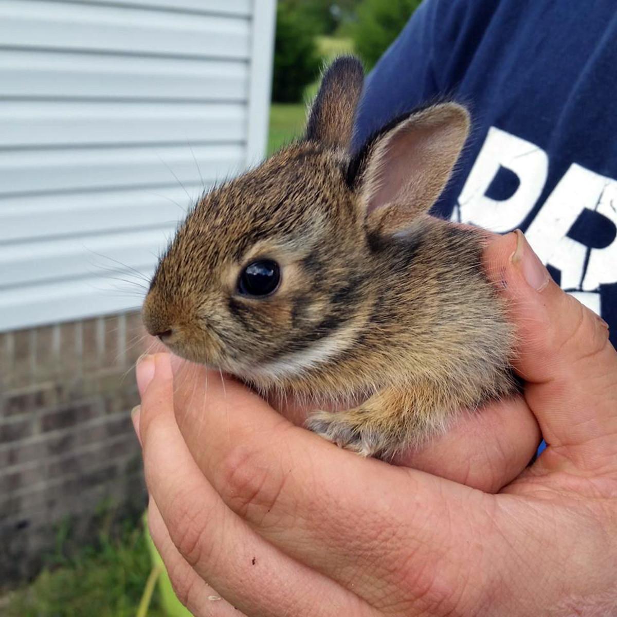 Bunny. Bunny. bunny