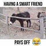 Who said donkeys weren't smart?????