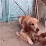 No, He's mine